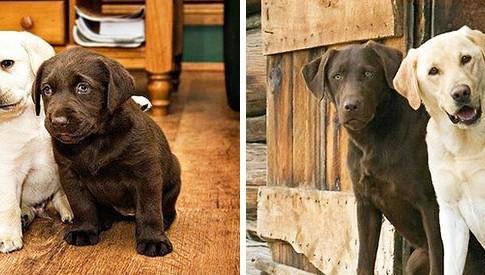 Φωτογραφίες σκύλων, λίγα χρόνια μετά την γέννησή τους!