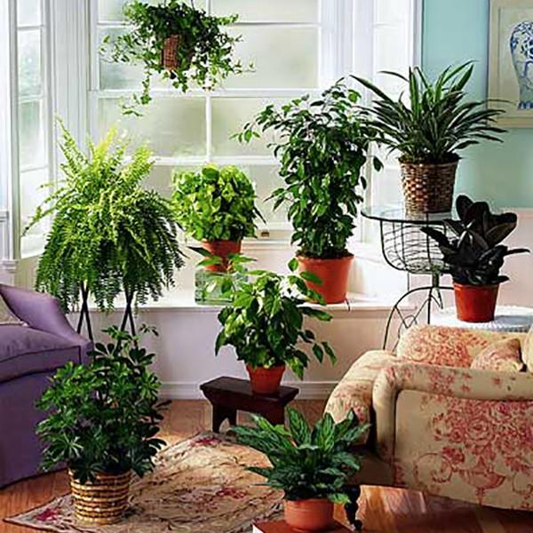 10 φυτά εσωτερικού χώρου που καθαρίζουν την ατμόσφαιρα του σπιτιού σου