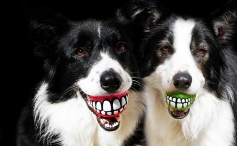 10 πρωτότυπα αξεσουάρ για σκύλους
